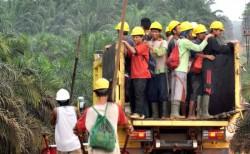 Banyak Pekerja Perkebunan di Babel Tidak Didaftarkan ke BPJS