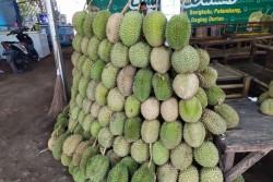 Durian asal Sumbar banjiri Bandarlampung