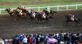 Event Pacu Kuda Payakumbuh akan Perlombakan 14 kelas