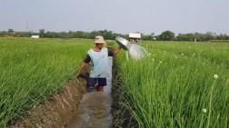 Hadapi Resiko Gagal Panen, Petani Tubaba Diminta Ikut Asuransi Pertanian?
