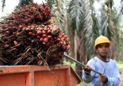 Harga TBS Kelapa Sawit Riau Mengalami Kenaikan Untuk Periode 14 - 20 April 2021