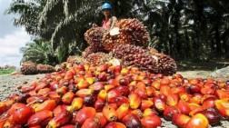 Harga TBS Kelapa Sawit Riau Mengalami Penurunan Untuk Periode 7 - 13 April 2021