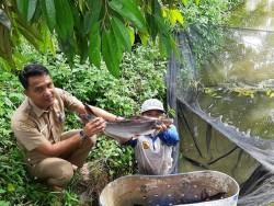 Kades Palung Raya: Kolam Ikan Pendobrak Ampuh Ekonomi Masyarakatnya