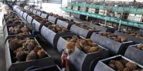 Larangan CPO Indonesia, Uni Eropa: Bisa Direvisi