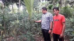 Manfaatkan Lahan Pinggir Sungai, Penghasilan Pria Aceh Ini Lebih Besar dari PNS