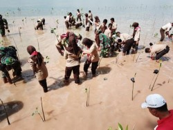 Pemecahan Rekor Muri Tanam Mangrove oleh Lantamal IV Tanjungpinang