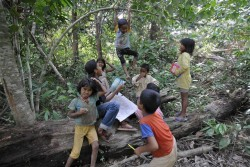 Pemprov Bengkulu Target Perhutanan Sosial 108.802 Hektare pada 2019