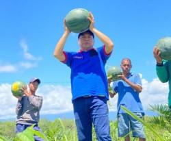 Petani Binaan Demokrat Riau Panen Raya Kacang dan Semangka, Achmad: Ini Perintah Langsung Ketum AHY