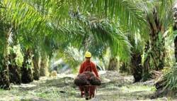 PTPN V akan Perluas Lahan Sawit di Riau