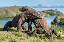 Relokasi UMKM Pulau Komodo Dikhawatirkan Berdampak Buruk Terhadap Perekonomian Masyarakat