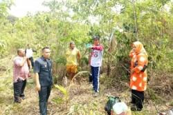 Wakil Bupati Lingga Kunjungi Perkebunan Kelapa di Pulau Talas